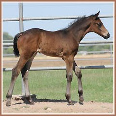 Cazador by Tradion, 18 days old