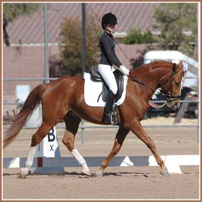 Horatio at his first under saddle schooling show where he received a 1st and 2nd place. Ridden by Kailee Surplus.