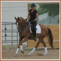 Hugo, 4 months under saddle, ridden by Cyndi Jackson.