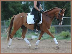 Hugo, 4 months under saddle, ridden by Cyndi Jackson