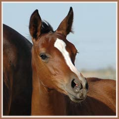 Phailin, 2006 filly by Aul Magic ox