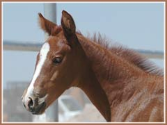 Sidney's 2006 filly by Bel Espace Go, 15 days