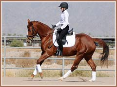 Solana, November 2010, ridden by Kailee Surplus