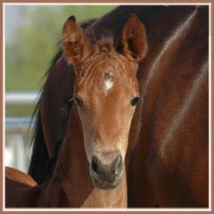 Talara, 2006 filly by Bel Espace Go, 3 weeks old